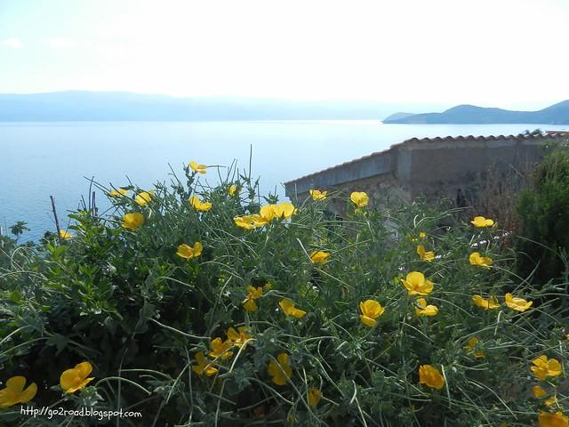 Вот такие цветы растут на острове Крк