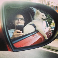 We are the happiest and cuttests boys on Earth!  #eskie #esquimalamericano #americaneskimo #gay #cutegay #dogs #pets #puppy #PetFriendly #handsomest