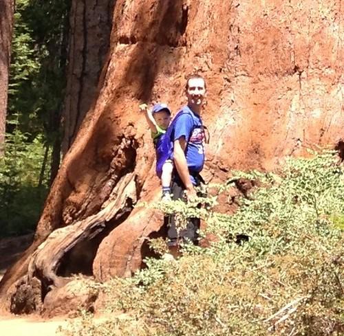 Big Tree, Small Pinecone Closeup