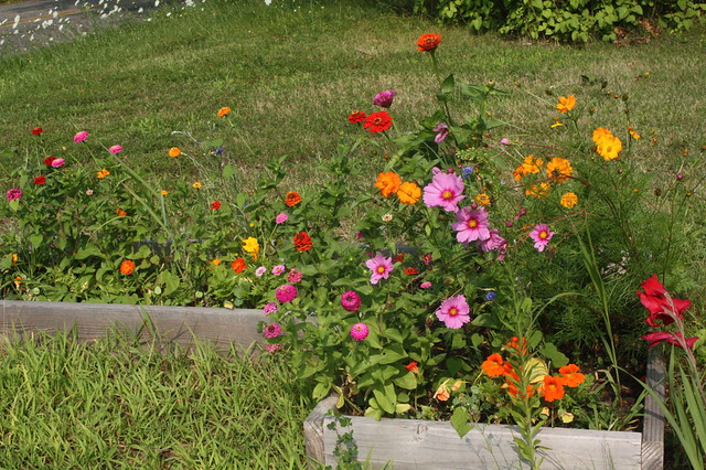 Cheerful Annuals