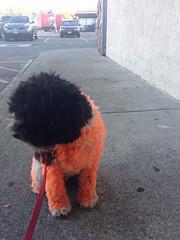 Orange Mojo 3