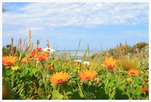 Flowers Weskus