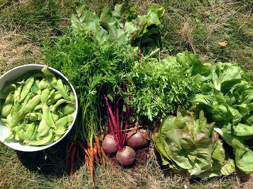 harvest 7-10-2014