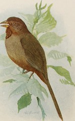 """Image from page 42 of """"The book of birds; common birds of town and country and American game birds"""" (1921)"""