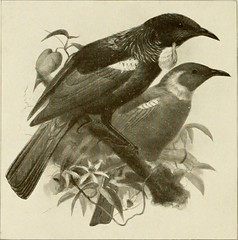 """Image from page 111 of """"The animals of New Zealand; an account of the dominion's air-breathing vertebrates"""" (1909)"""