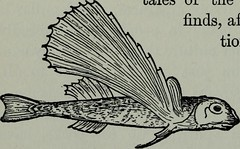 """Image from page 173 of """"Young folks library"""" (1902)"""