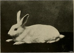 "Image from page 289 of ""Our domestic animals, their habits, intelligence and usefulness;"" (1907)"
