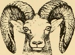 "Image from page 221 of ""Horn measurements and weights of the great game of the world: being a record for the use of sportsmen and naturalists"" (1892)"