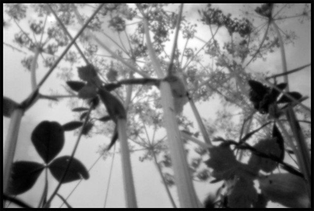 THE MEADOW . PINHOLE SHOT