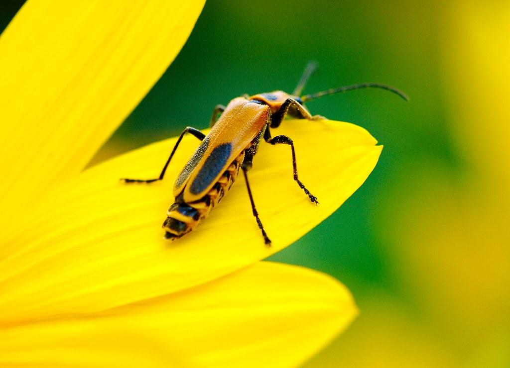 Bug_3