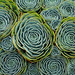 Succulents by Harold Davis