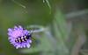 Blomsterbukk