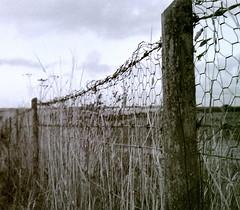 Fridays Fence [Olympus Trip35]