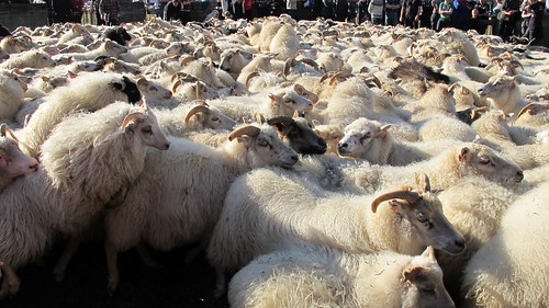 Gathering of the sheep