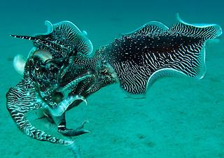 """<img src=""""padi-diving-middle-reef-tioman-island-malaysia.jpg"""" alt=""""PADI diving, Middle Reef, Tioman Island, Malaysia"""" />"""