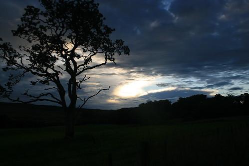 sunset sky tree nature field night clouds scotland dusk scottishhighlands