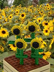 Lego MOC Sunflowers