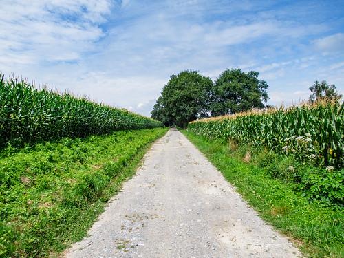 Camino Via Tolosana 570.jpg
