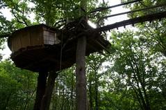 woodland, rainforest, leaf, tree, forest, tree house, jungle, rural area,