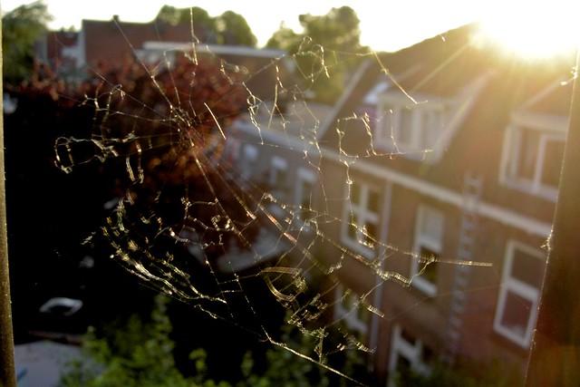 A noiseless patient spider_Nijmegen