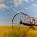 Small photo of On Prairie