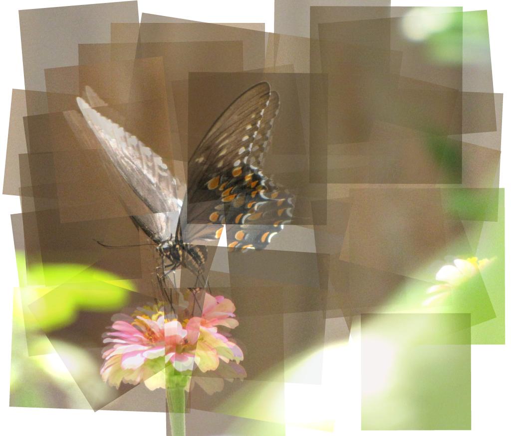 Kooky Butterfly