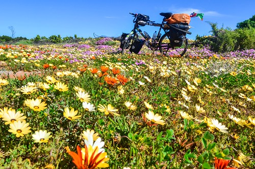 Cycling in the flowers of the Western Cape province, South Africa