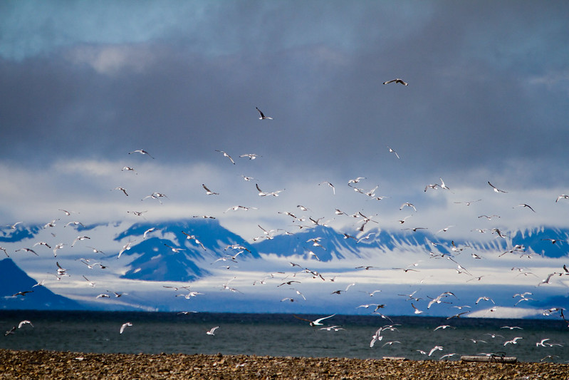 RelaxedPace01172_Svalbard7D5503