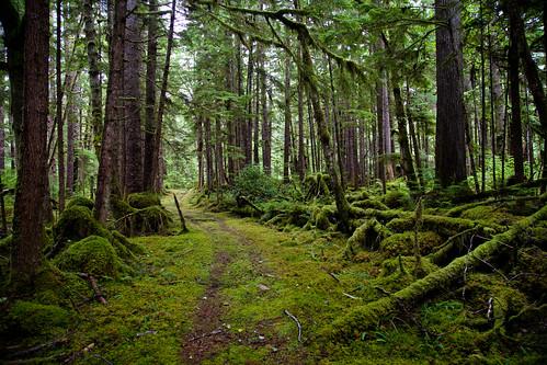 green forest moss rainforest britishcolumbia provincialpark grahamisland haidagwaii naikoon