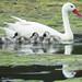 Cisnes / Yoncaven / Chile by LeonCalquin (2)