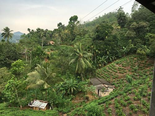 kelanigangariver plantationhotel kithulgale srilanka grahamekins appleiphone6s 2900