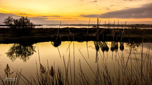 Golden reflects...