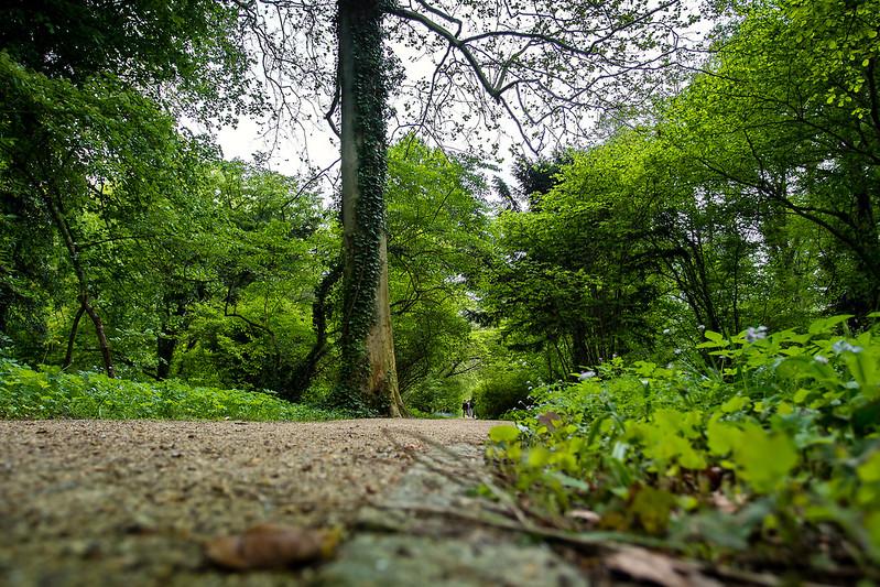 Alejka w Arboretum w Kórniku