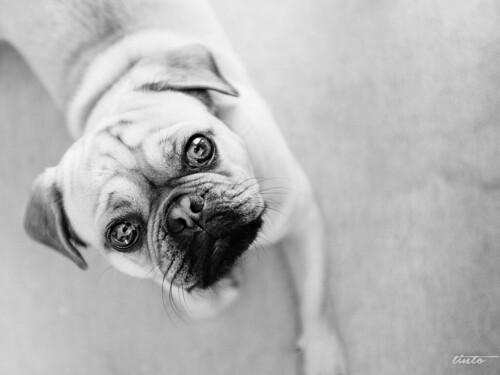 Dog Dienstag (neue Rubrik?)
