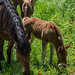 Small photo of Foal