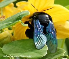 Resting Wings............