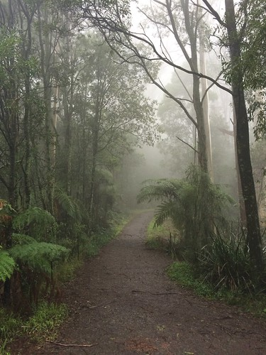 The 1000 Steps Kokoda Trail Memorial Walk
