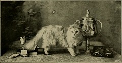 """Image from page 110 of """"Our domestic animals, their habits, intelligence and usefulness;"""" (1907)"""