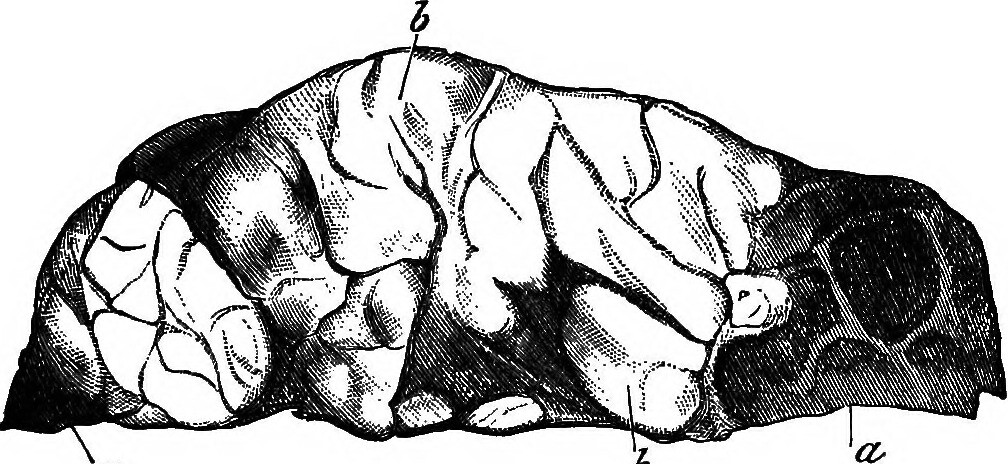 Image from page 646 of The principles and practice of veterinary medicine (1888)