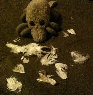 Dust Mite & pillow debris