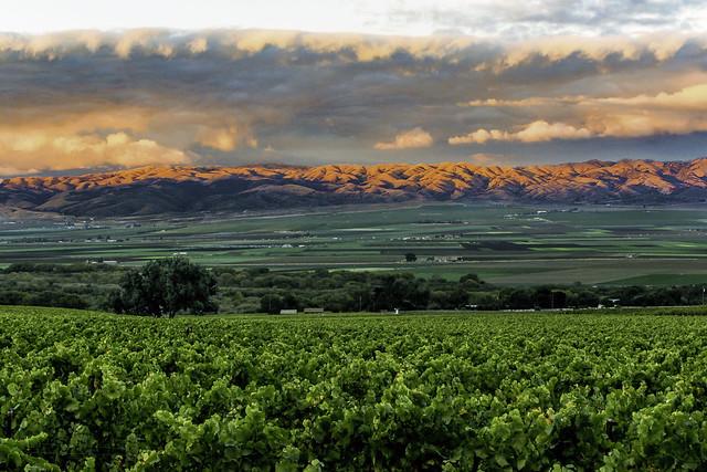 Sundown- Vineyards, Salinas Valley & Gabilan Mtns