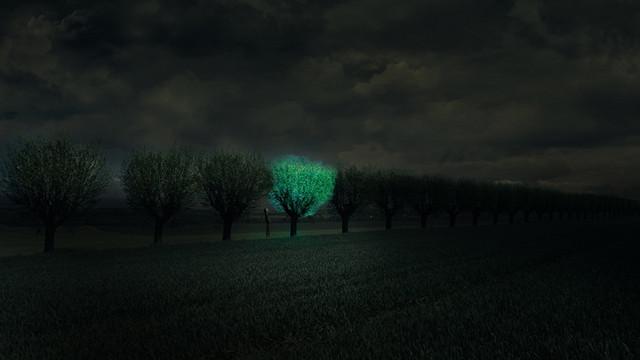 arboles luz