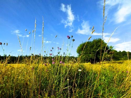 sky nature landscape norfolk wildflowers