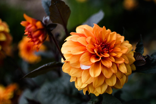 flowers upton house-19