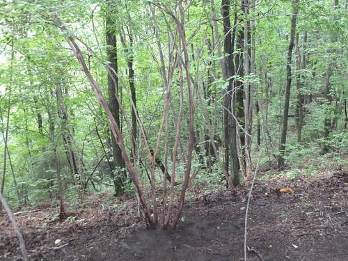 ゆりかごの木@ベルツの森