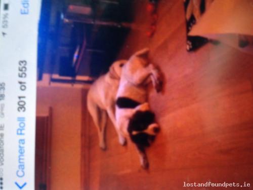 Sat, Aug 16th, 2014 Lost Female Dog - N63, Galway