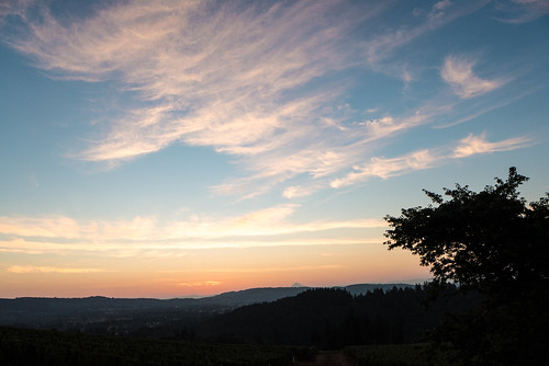 oregon landscape vineyard skies dundee grapes pinotnoir willamettevalley redhillsvineyard