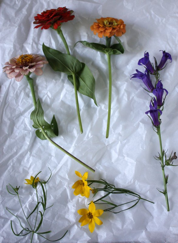 cut flowers on tissue paper: zinnia, liatris, coreopsis