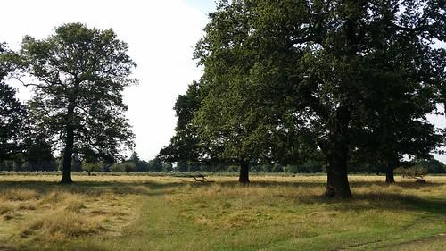 Bushy Park #sh #LondonLOOP