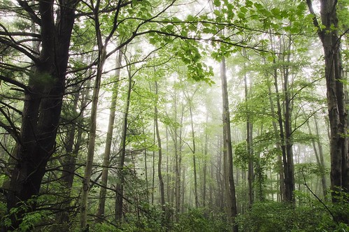 trees mist fog photoshop woods upstatenewyork centralnewyork newyorkstate endicott ibmglen nikcollection